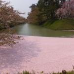 弘前公園の花いかだ