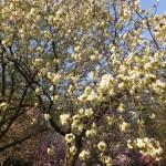 春の花満開です