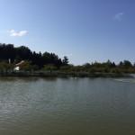 猿賀神社の池
