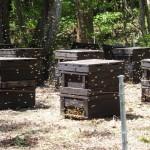 座頭石のミツバチ