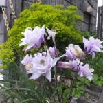 教会の花々