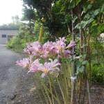 蓮の花ほか花々が