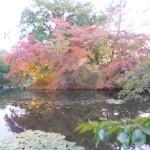 弘前公園の紅葉が進んでいます。