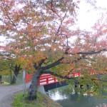 弘前公園の紅葉・いま