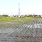 田んぼに水が