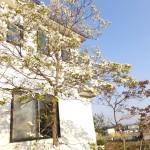 波岡教会の花