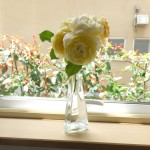 梅雨時と花々
