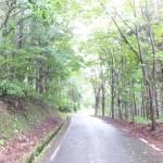 ロマントピアの森